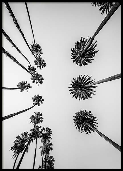 Palm Trees Above Poster in der Gruppe Poster / Naturmotive bei Desenio AB (10234)