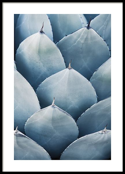 Blue Agave No3 Poster in der Gruppe Poster / Fotografien bei Desenio AB (10831)