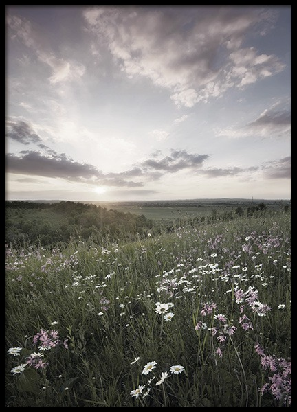 Meadow Sunset Poster in der Gruppe Poster / Naturmotive bei Desenio AB (10918)