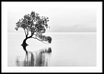 Lonely Wanaka Tree Poster in der Gruppe Poster / Naturmotive bei Desenio AB (11487)